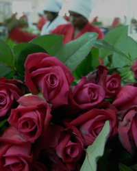 European market for fair and sustainable flowers and plants