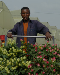 Horticulture Development Strategy for Ethiopia