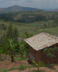 Feasibility study of the floricultural sector in Rwanda