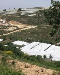 Capacity building floriculture sector Lebanon